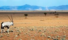 Namibia im Allrad-Camper