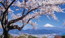 Japan Individuell