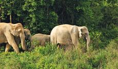 Bangkok, Elefanten in Kui Buri & tropisches Koh Talu