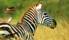 Tansanias unberührter Süden & Inseltraum Sansibar