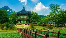 Ginseng Tour