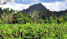 Khao Sok Nationalpark & Kochkurs