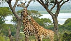 Karen Blixen Museum & Giraffen Center