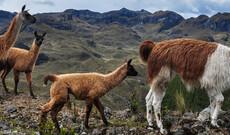 Vielfältiges Ecuador & Galápagos