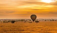 Safari-Erlebnis in Tansania & Entspannen auf Sansibar
