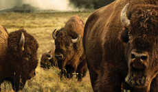 Yellowstone Wildlife Erlebnis