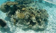 Moorea's Unterwasserwelt