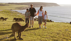 Kangaroo Island & Great Ocean Road