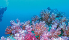 Ningaloo Reef & Karijini