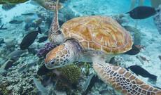 Bora Bora Lagunensafari & Motu Tapu