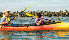 Per Kajak durch die Walvis Bay