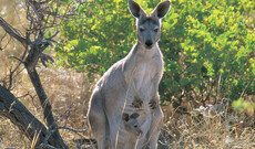 Kangaroo Island Entdeckertour