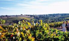 Weintour South Australia