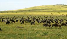 Masai Mara & Gorillas inkl. Flug
