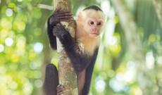 Abenteuer - Costa Rica