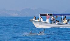 Delfinabenteuer