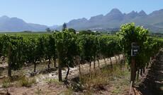 Kulinarischer Spaziergang durch Stellenbosch