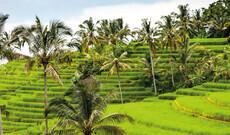 Balis Nordküste