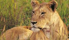 Shimba Hills Game Reserve