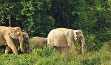 Elefanten in Kui Buri & tropisches Koh Talu