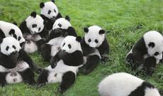 Pandas erleben