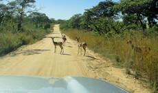 Avis Mietwagen Afrika